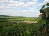 Das Foto vermittelt den Eindruck der Rheinhessischen Hügellandschaft. Zu sehen ist der Gundersheimer Königsstuhl.