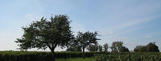 In den Vier Morgen stechen die beiden Kirschbäume der Großväter hervor. Sommerlich blauer Himmel verleitet zur Rast im Schatten der Bäume.