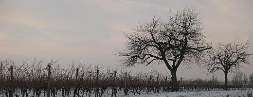Foto zeigt die beiden Kirschbäume aus den Vier Morgen zu spät winterlicher Landschaft. Die rötliche Abenddämmerung schreitet voran.