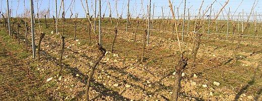 Auf dem Foto sieht man den steinreichen Lößboden nach dem Frühjahrsschnitt. Langsam beginnen die Gräser zu wachsen.