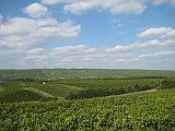 Diese Aufnahme zeigt den weitläufigen Horizont des hügelige Rheinhessen voller grüner Wingert.
